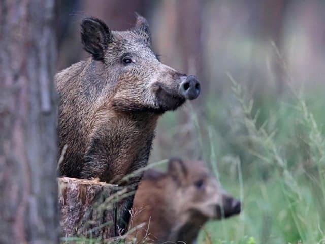 Produkte Wildschwein Hofladen Simmerl